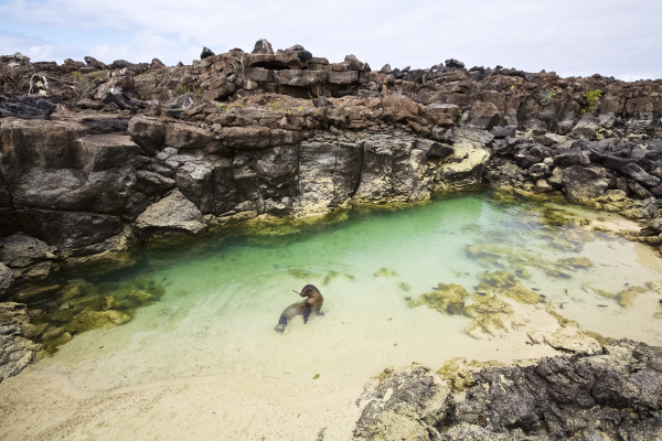 sea lion swimming in rock pool