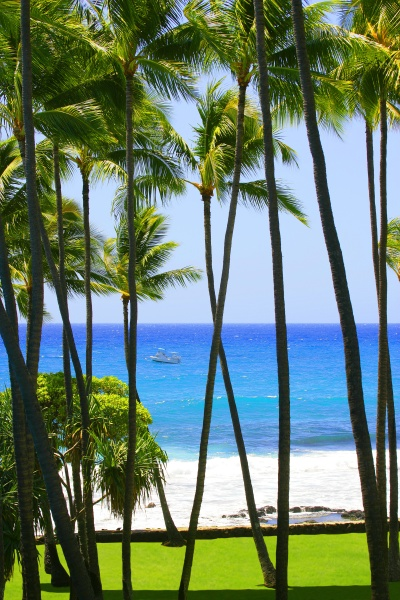 palm trees hawaii usa
