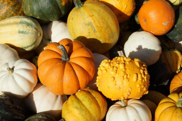 ornamental pumpkins after harvest
