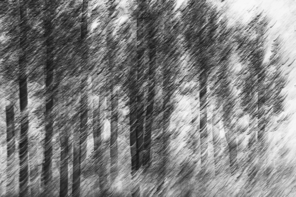 blurred motion a forest of