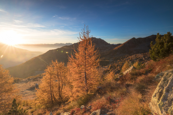 sunburst on colorful larches during fall