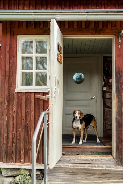 dog standing at opened door in