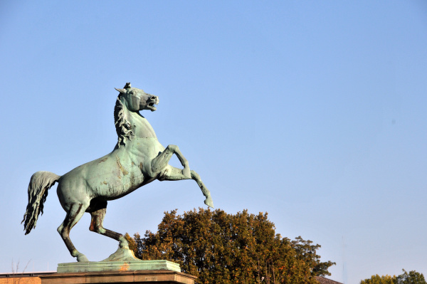 saxony horse in hannover