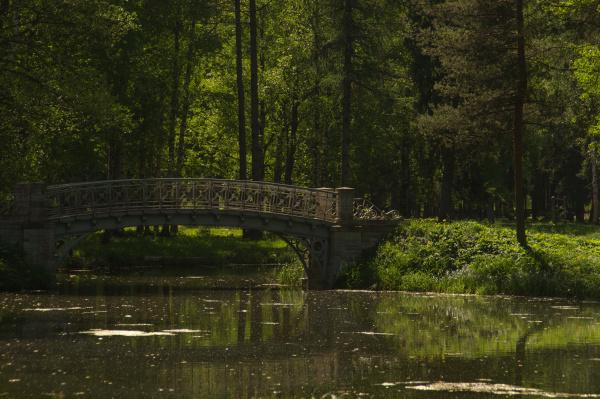 bridge in the forest nature landscape