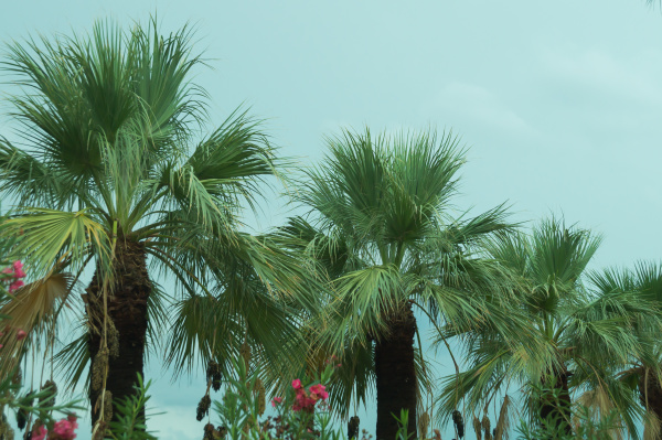 palm trees with the cloudy sky