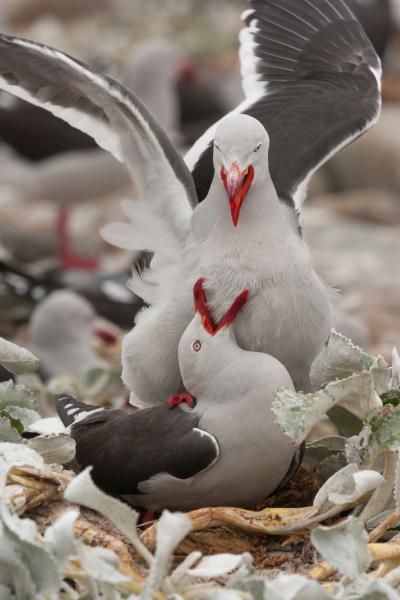 dolphin gulls falkland islands