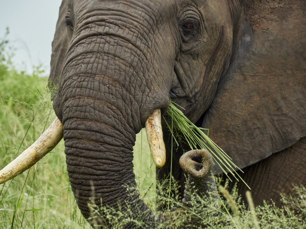 south africa mpumalanga kruger national park