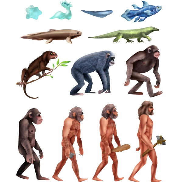 colored and isolated darwin evolution icon
