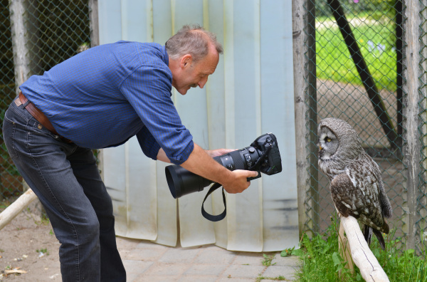 photographer and great grey owl