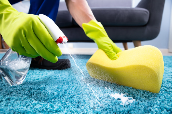 person, cleaning, stain, on, carpet - 27240144