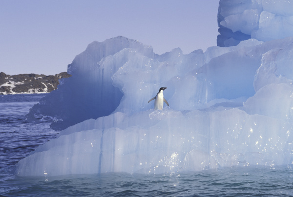 antarctica penguin adelie on ice floe