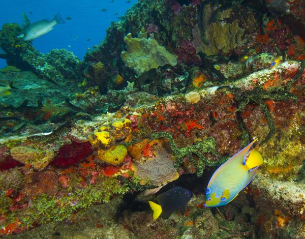 sugar wreck northern bahamas caribbean queen