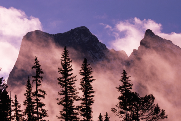 trees silhouetted against mist and mountains
