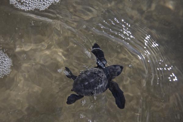 central america el salvador pacific ocean