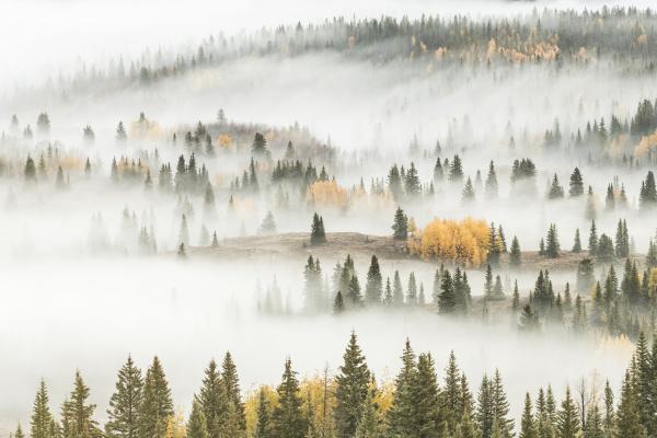 usa colorado san juan national forest