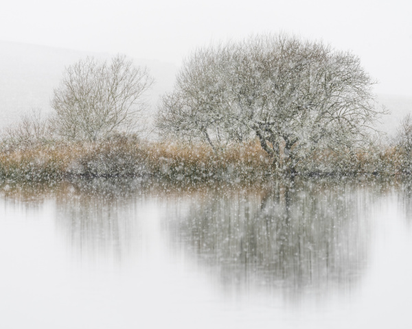 hawthorn and snowfall broad pool gower