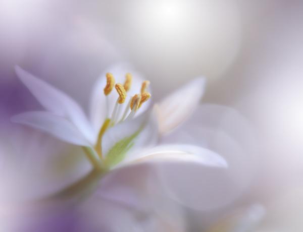 beautiful macro shot of magic flowers