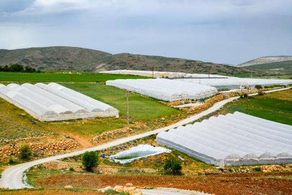 tomato plants growing inside big industrial