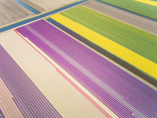 aerial view of colorful blossoming fields