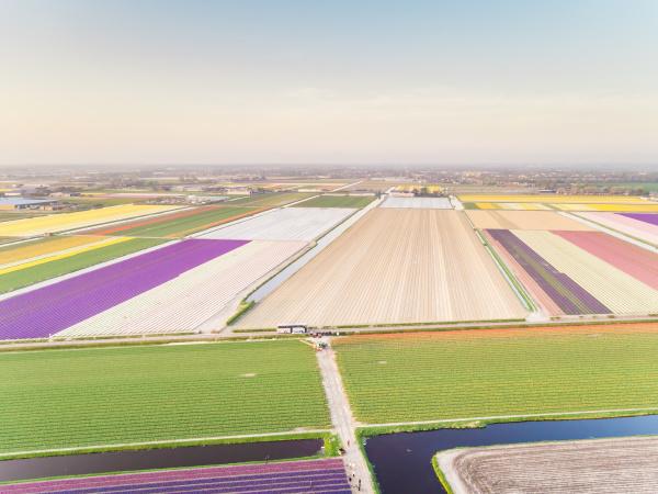 amazing aerial view of beautiful tulip