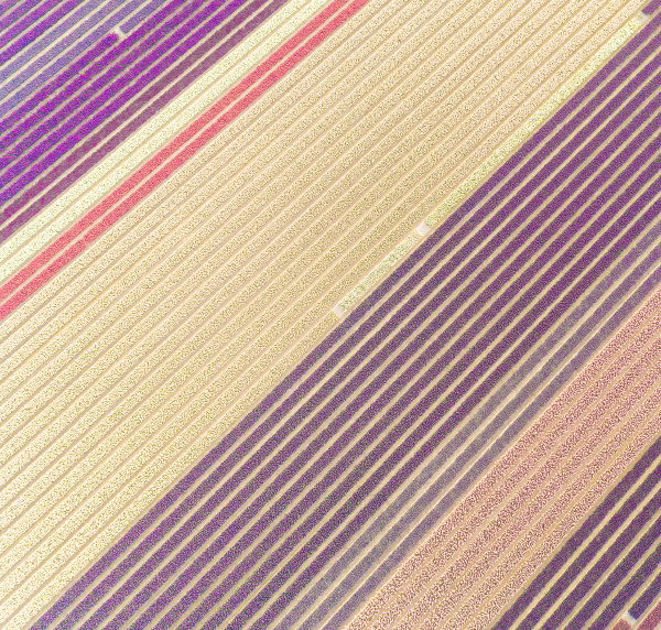 aerial view of colorful rows of