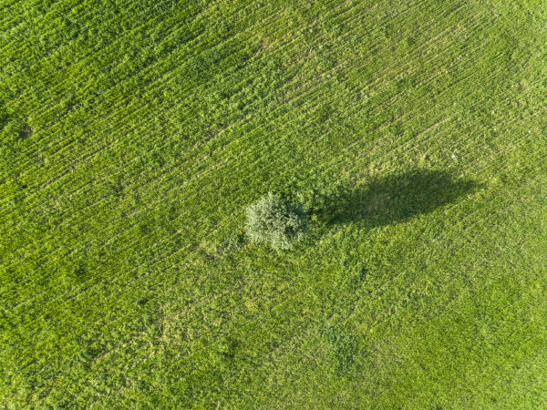 aerial view of tree on agricultural