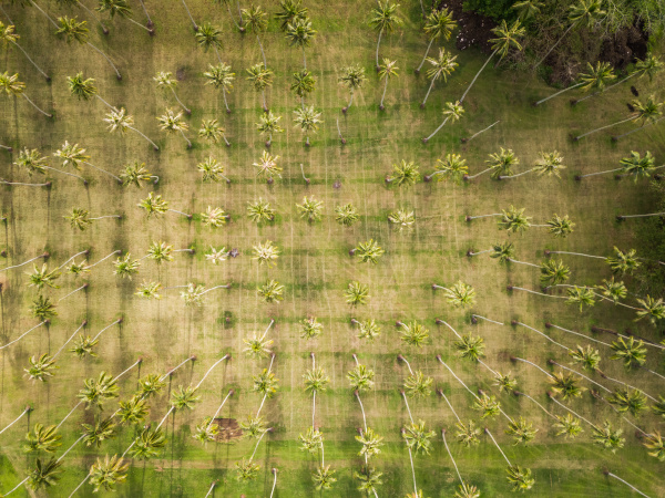 aerial view of a forest of