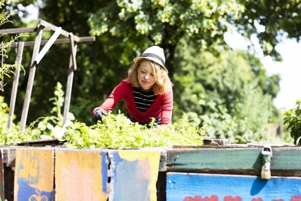 mid adult woman tending plants in