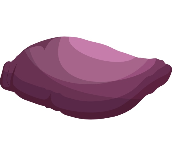 purple maori potato vector illustration of