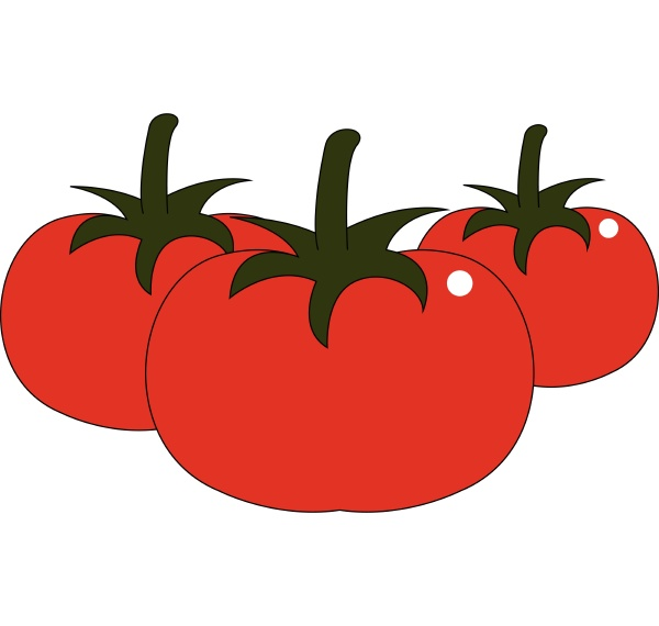 tomatoes hand drawn design illustration vector