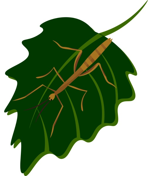 stick insect illustration vector on white