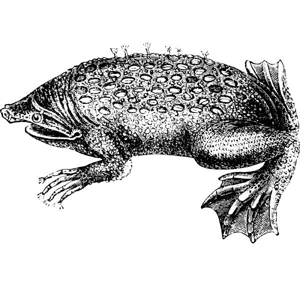 toad pipa vintage engraving