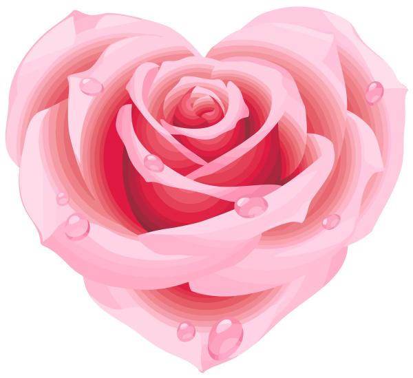 heart of pink rose shape romantic