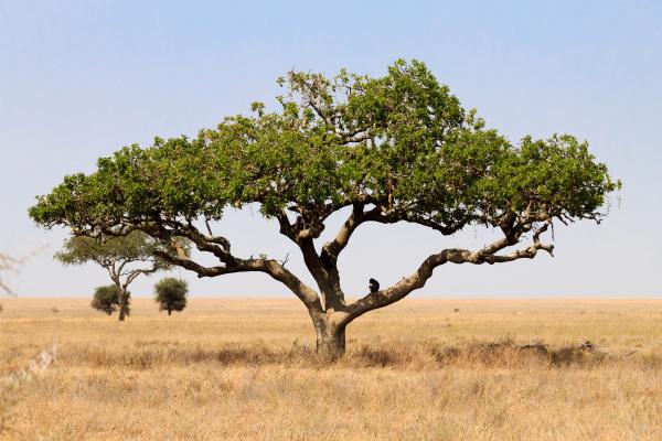 serengeti national park landscape tanzania africa