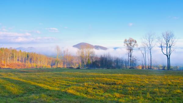 bohemian switzerland in the mist above