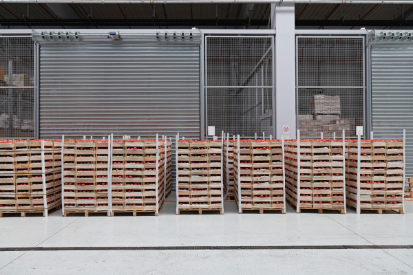 tomato storage