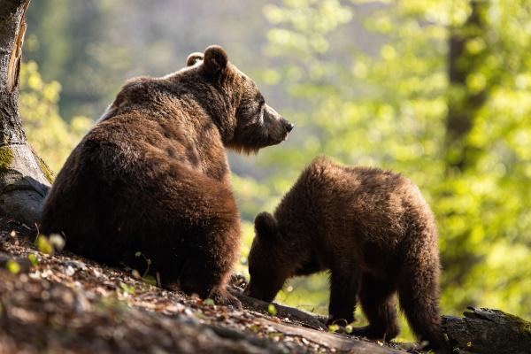 a pair of fluffy brown bear