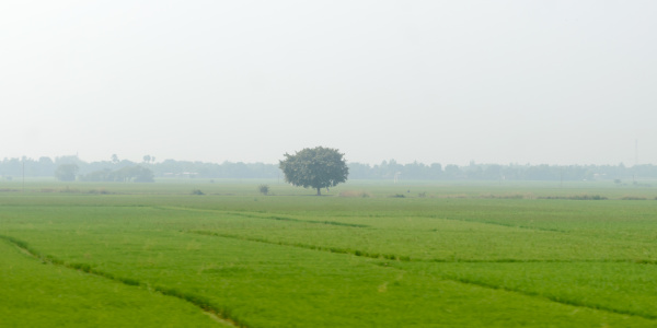 a alone solitary tree on a