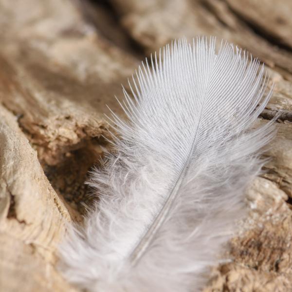 a bird s feather lies on