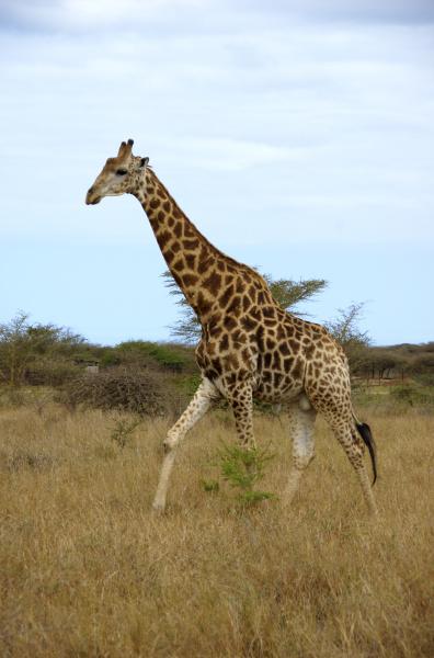 africa south africa kwazulu