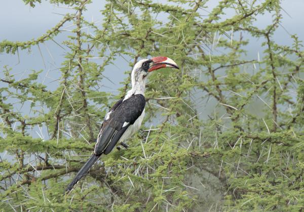 africa tanzania serengeti a male von