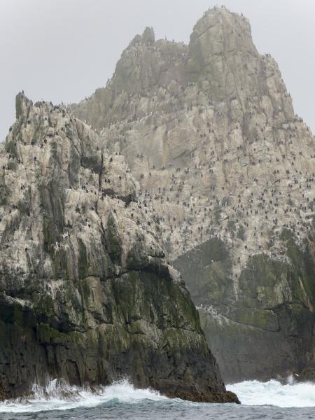 the shag rocks close to south