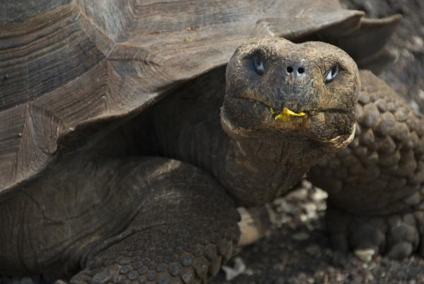 south america ecuador galapagos islands female