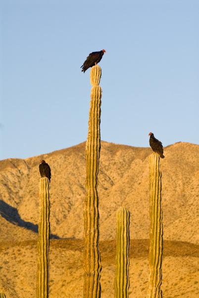 mexico baja california sonoran desert