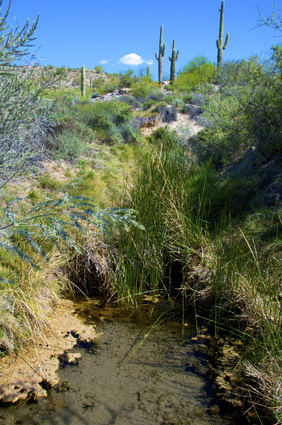 organ pipe cactus national monument the