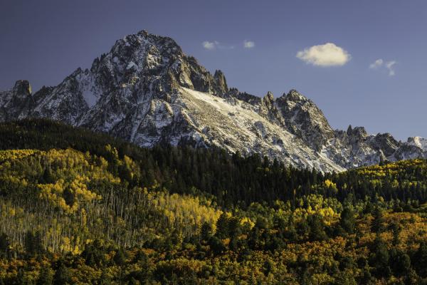 autumn aspen trees and sneffels range