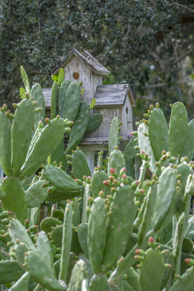 prickly pear cactus and birdhouse