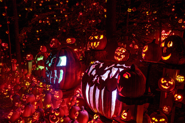 large display of many pumpkins decorated