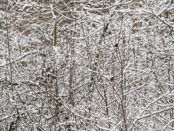 white snow on tree branches in