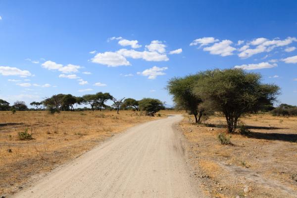 tarangire national park landscape tanzania africa